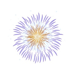 Icon fire works vector