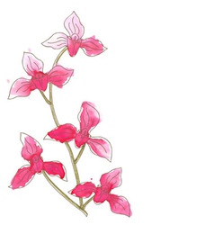 Branch with orchid flowers vector