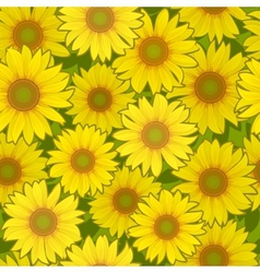 Sunflower flower seamless background vector