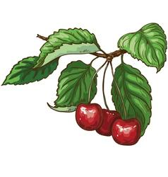 Cherry on branch vector