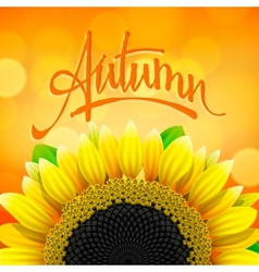 Floral autumn background with sunflower vector