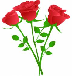 Bouquet of three red rose vector