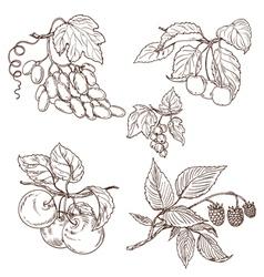 Fruit outline set vector