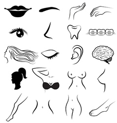 Women body parts human vector