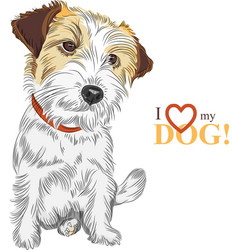 Wire-haired dog jack russell terrier vector