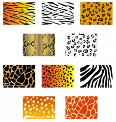 Animal fur and skin vector