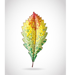 Autumn colorful leaf vector