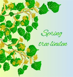 Spring tree linden spring green background vector