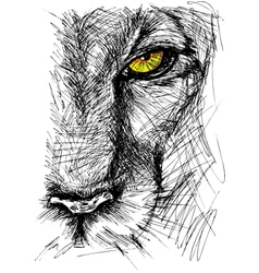 Hand drawn sketch of a lion vector