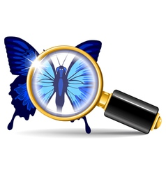 Magnifier and butterfly vector