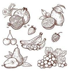 Icon fruits vector