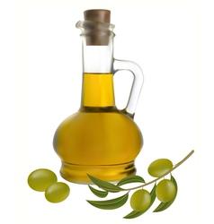 Bottle of olive oil vector