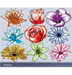 Colorful flowers set vector