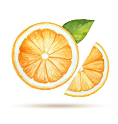 Watercolor orange isolated on white background vector