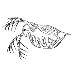 Daphnia vector