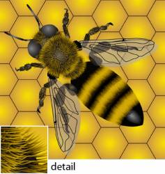 Bee pattern vector