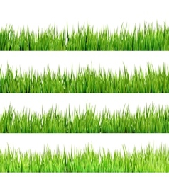 Grass isolated on white eps 10 vector
