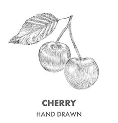 Sketch of cherry hand drawn fruit collection vector