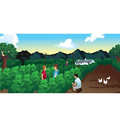 Coffee harvest field with house and mountains vector