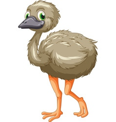 Emu cartoon vector