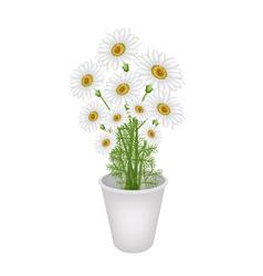 A lovely fresh chamomile in flower pot vector