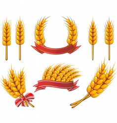 Wheat icons vector