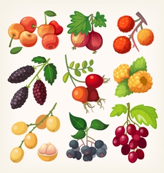Juicy colorful berry icons vector