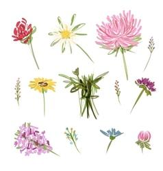 Set of garden flowers sketch for your design vector