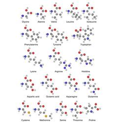 Chemical formulas of twenty basic amino acids vector