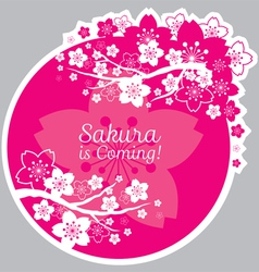 Cherry blossoms or sakura flowers label vector