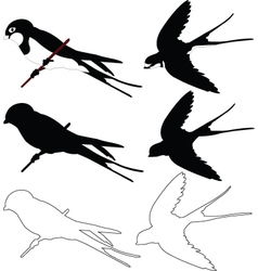 Swallows collection - vector