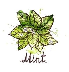 Sketch mint leaf vector
