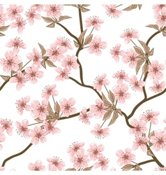 Cherry blossom background seamless flowers pattern vector