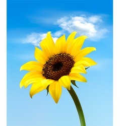 Background with sunflower field over cloudy blue vector