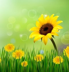 Summer background with yellow flowers and grass vector