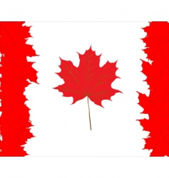 Canadian maple leaves symbol vector