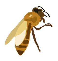 Brown bee vector