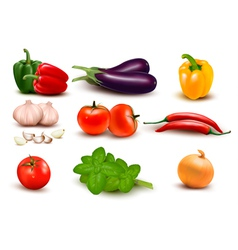 The big colorful group of vegetables vector