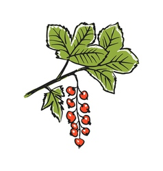 Red currants vector