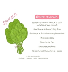 Cartoon hand drawn spinach health benefits vector