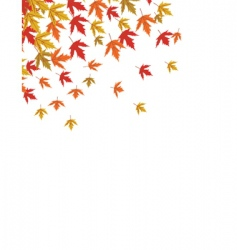 Falling maple vector