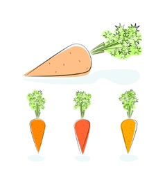 Carrot root vegetable on a white background vector