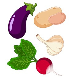 Vegetables vector
