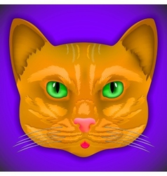 Cat face eyes  animal cute kitten bow hair facial vector