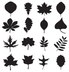 Silhouettes of leaves vector