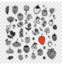 Berries collection sketch for your design vector