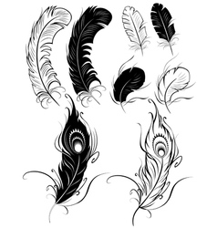 Silhouettes of feathers vector