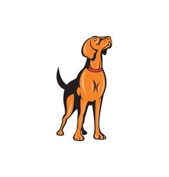 Cocker spaniel golden retriever dog cartoon vector