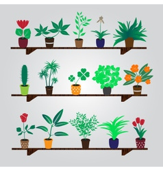 Home houseplants and flowers in pot on the shelf vector