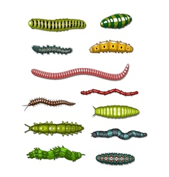 Caterpillars and worms vector